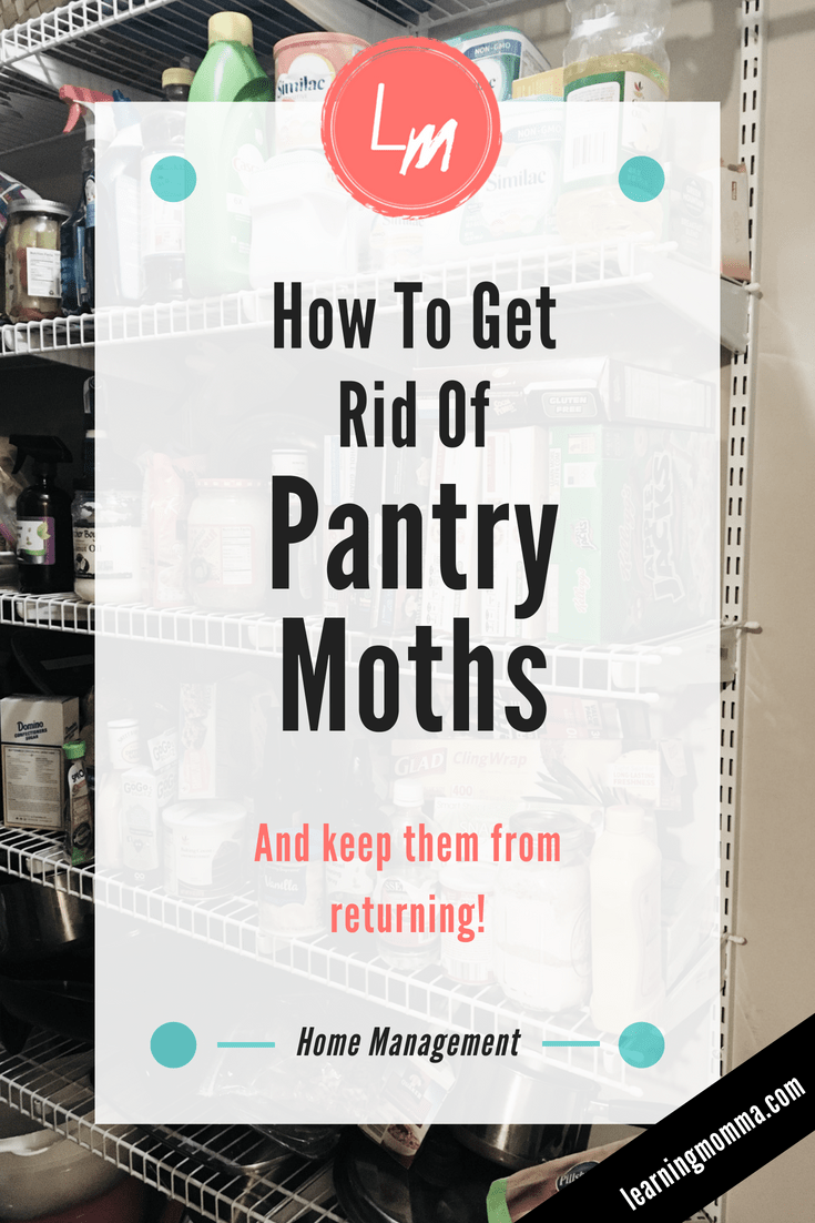 How To Get Rid Of Pantry Moths - Exterminating Moths In The Kitchen